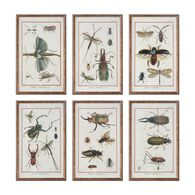 Uttermost Multi Insect Prints, S/6