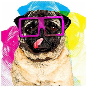 Picture of AA TEX 12X12 PUG IN GLASSES