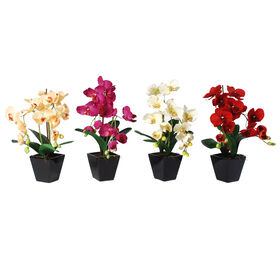 Picture of Orchid in Black Tapered Square Pot- 17.5 in.