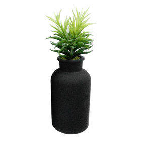 Picture of Black Glass Bottle Succulent- 13-in