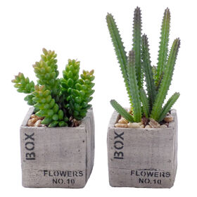 Picture of Succulent Flower Box- 6 in.