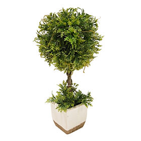 Picture of Dusty Miller Topiary- 17 in.