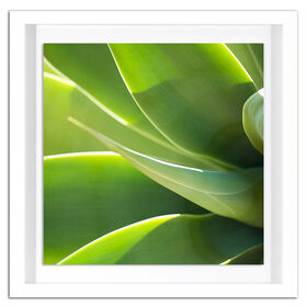 Picture of Palm Leaves Bloom Print - 19 x 19-in