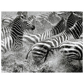Picture of African Zebra Canvas Art- 40x30 in.