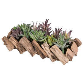 Picture of Succulent in Driftwood Arrangement- 12 in.