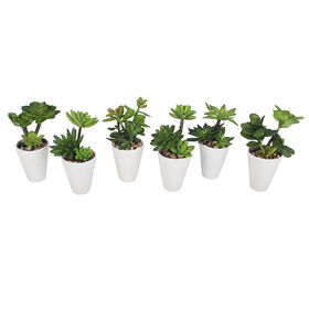Picture of White Succulent Vases- 8 in.
