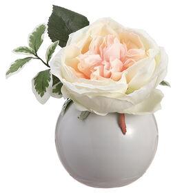 Picture of Open Rose in Ceramic Vase 6.5-in