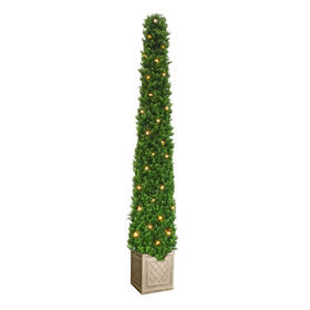 Picture of Lighted Pyramid Boxwood Topiary 60 in.