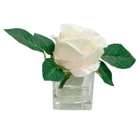 Picture of 5IN ROSE IN SQ GLSS CNTNR LTPK
