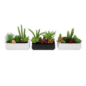 Picture of Succulent Mix in Ceramic Center- 7.5 in. (sold separately)
