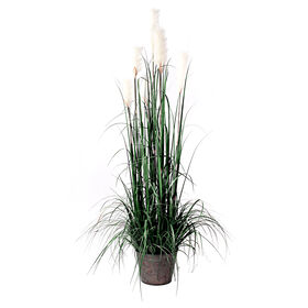 Picture of Pampas Grass in Metal Pot 72 in.