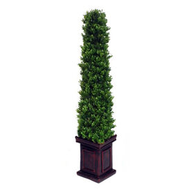 Picture of Pyramid Boxwood Topiary 36 in.