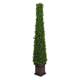 Picture of Pyramid Boxwood Topiary 61 in.
