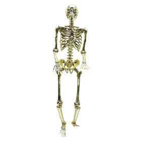 Picture of Chrome Gold Skeleton