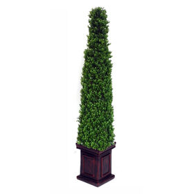 Picture of Pyramid Boxwood Topiary 48 in.