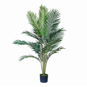 Picture of Paradise Palm Tree in Plastic Pot - 5-ft