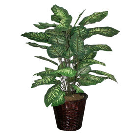 Picture of Dieffenbachia in Basket