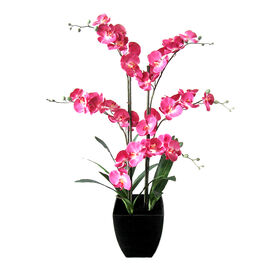 Picture of Pink Orchid in Black Pot