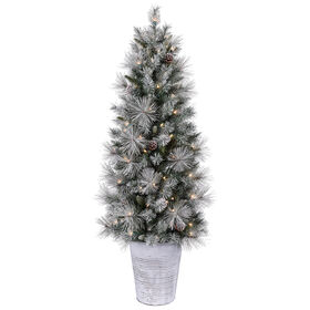 Picture of E6 4.5ft Frosted Sugar Pine Tree