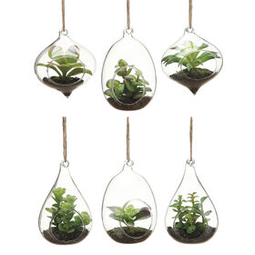 Picture of Hanging Succulents in Glass- 4.5-in (assorted)