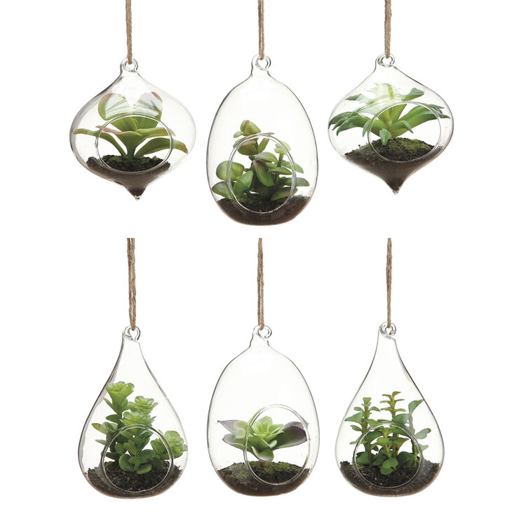 Hanging Succulents in Glass- 4.5-in (assorted)