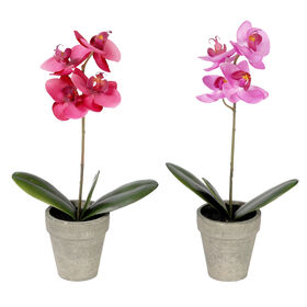 Picture of 13  ORCHID IN GREY POT 2A