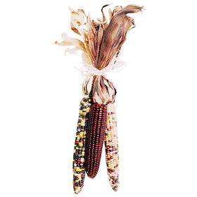 Indian Corn Bundle